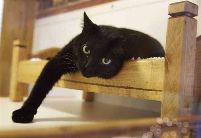 A black cat was reunited with its owner five years after it embarked on a cross-country journey.