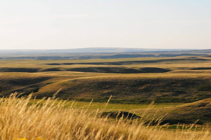 The Wideview Complex is 1,222 hectares and is situated between the two blocks of Grasslands National Park.
