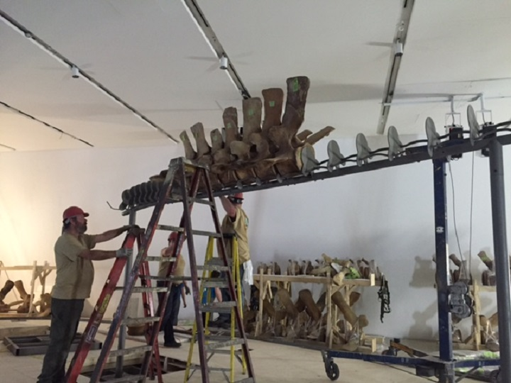 The largest mammal to ever live on earth will soon be on display at the Royal Ontario Museum.