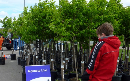 Kelowna offers homeowners discounts on trees - image