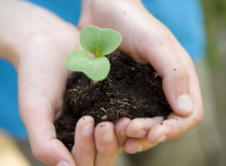 Ottawa pledges to save the 50 Million Tree planting program in Ontario.