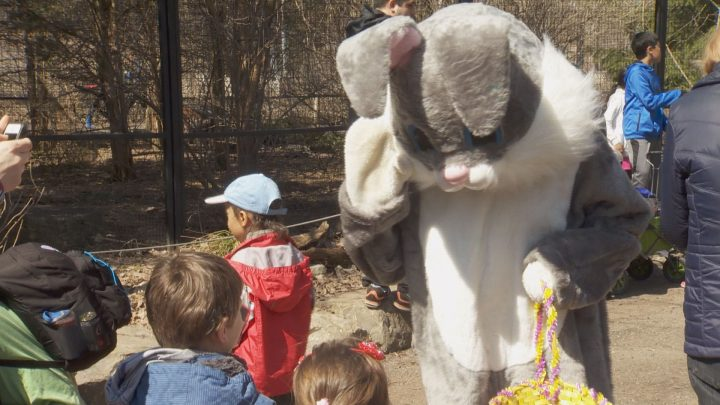 A child takes part in a fact-finding mission at the Ecomuseum Zoo. A Saturday, April 15, 2017.