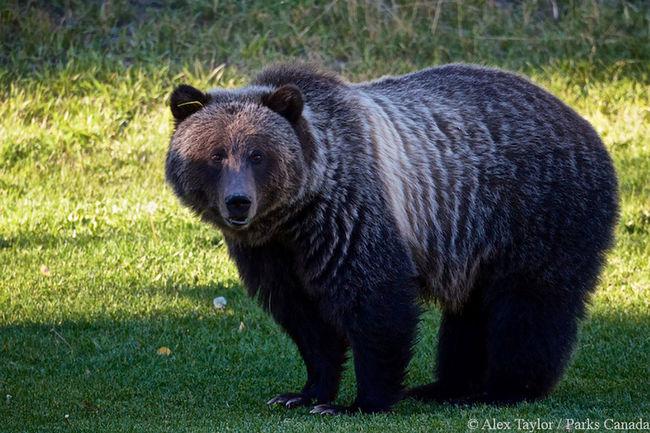 Bear 148.
