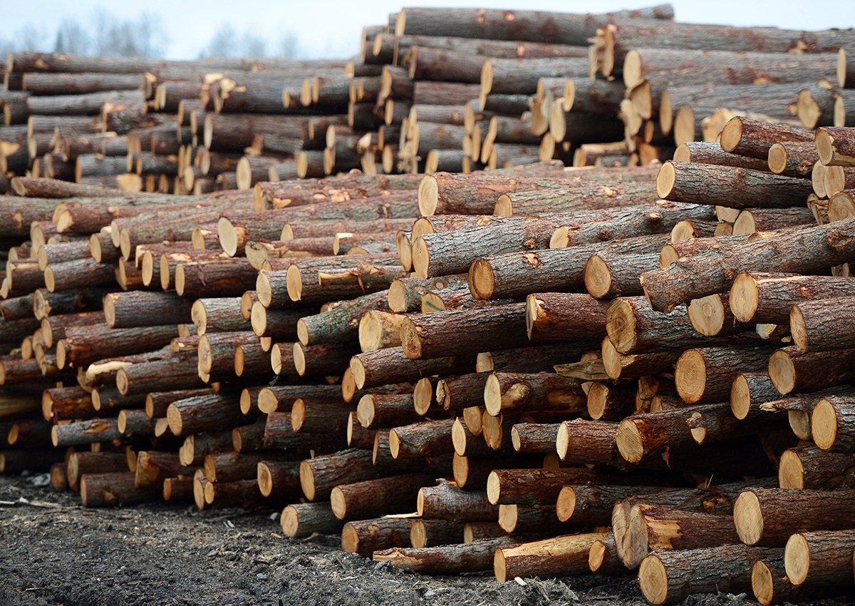 Logs are stacked at Murray Brothers Lumber Company woodlot in Madawaska, Ont. on Tuesday April 25, 2017.
