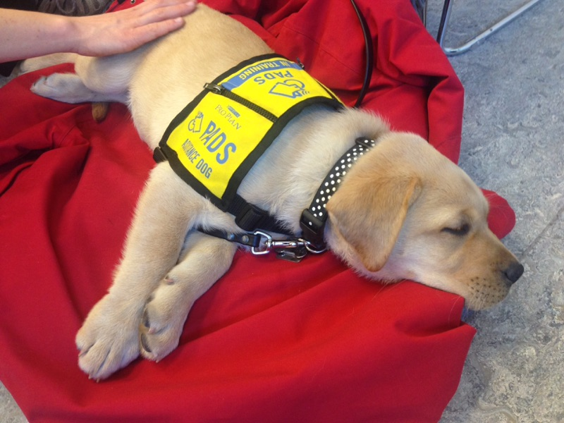 Soon-to-be service dogs visit students at Bow Valley College in Calgary on April 4, 2017.