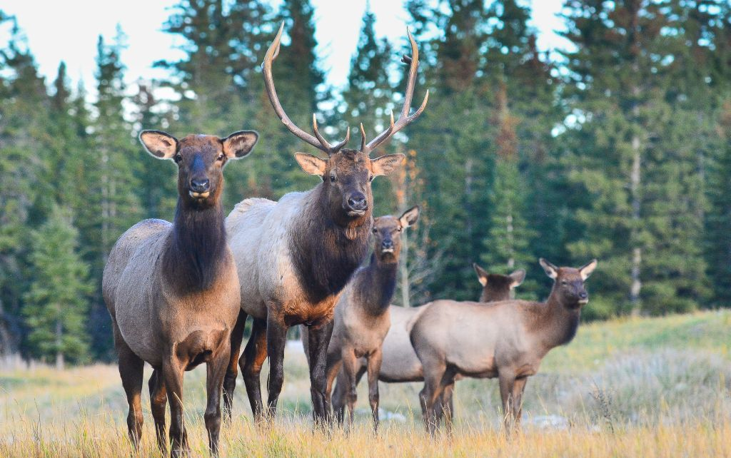 The size of a wildlife corridor in the Bow Valley among concerns for wildlife conservationists.