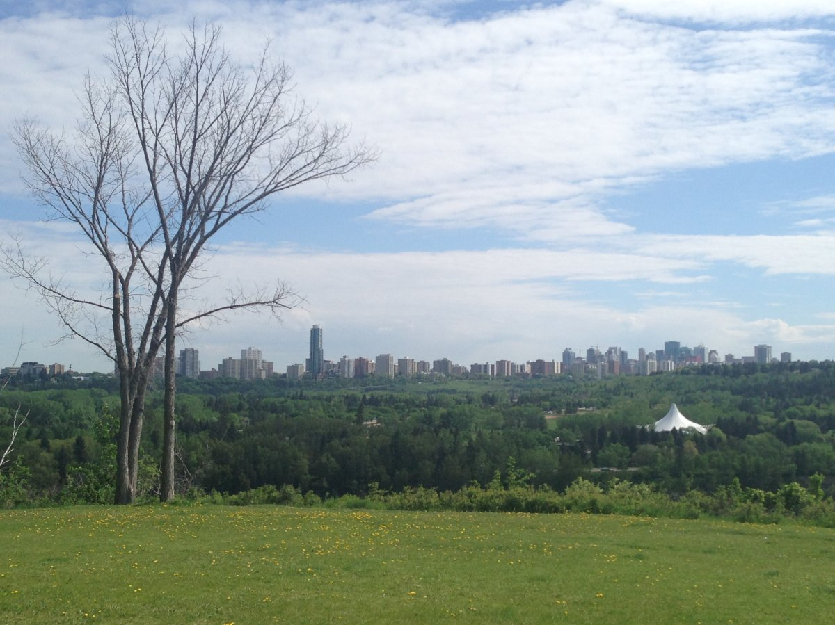 Residents in the Valleyview neighbourhood suspect someone has been damaging trees in the area to get a better view of downtown Edmonton.