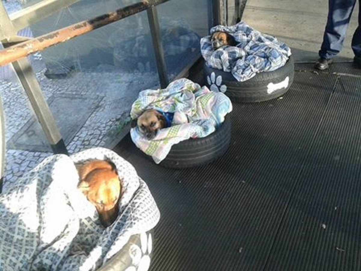Three stray dogs were taken in by a local bus terminal in Brazil.