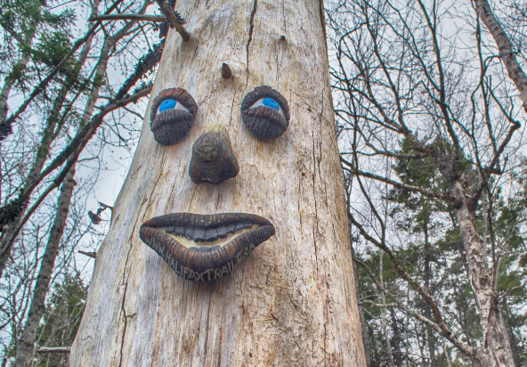Greg Taylor's smiling 'face' made of clay is seen on a tree in the Colpitt Lake area in Halifax.