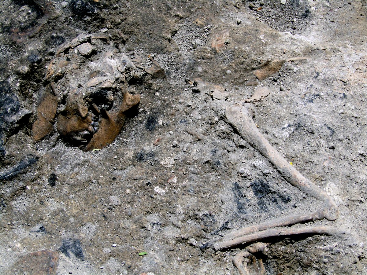This photo made available by the Italian Culture Ministry, shows part of the 1,800-year-old skeleton of a dog, which apparently perished in a blaze in Rome.