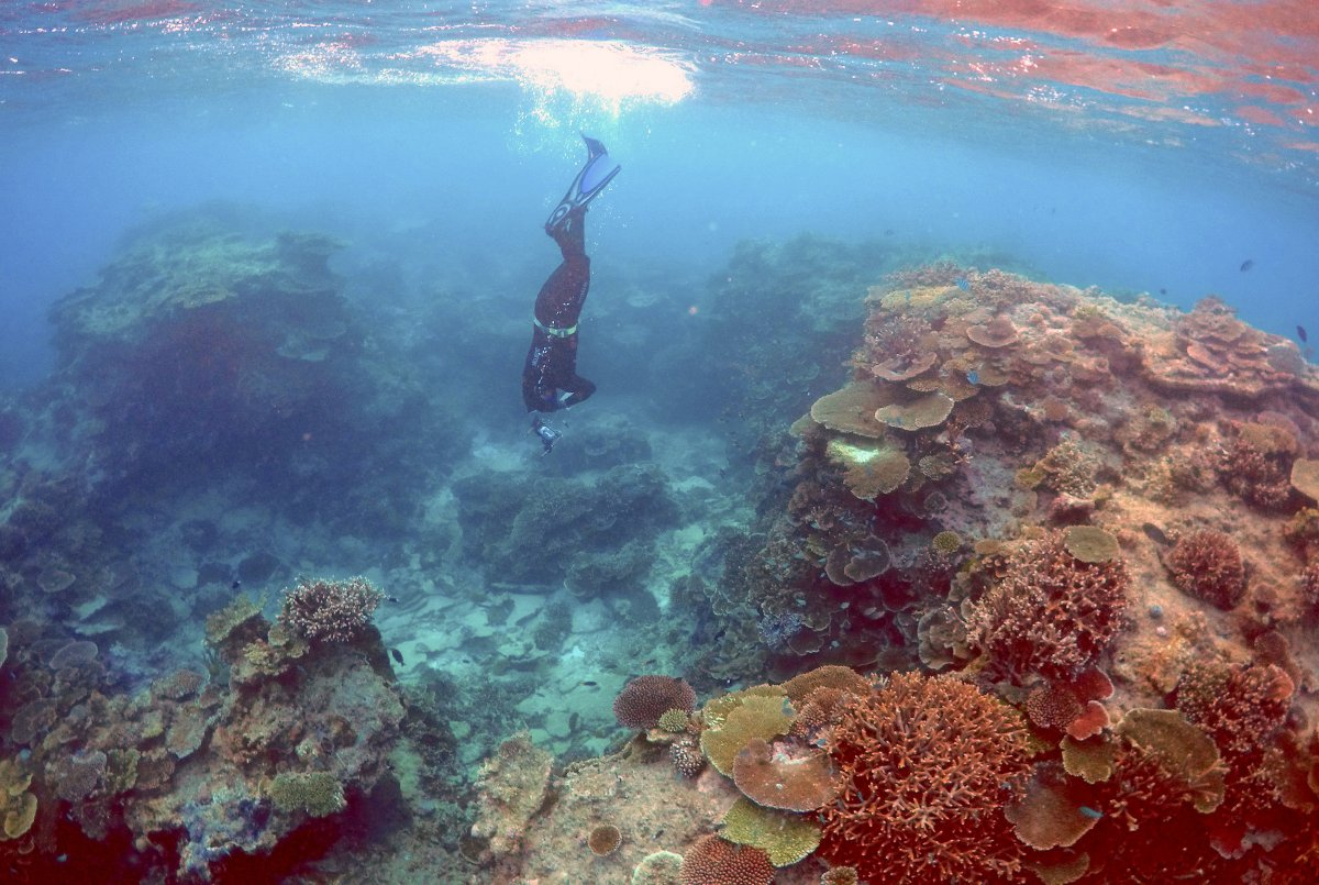 Oliver Lanyon, Senior Ranger in the Great Barrier Reef region for the Queenlsand Parks and Wildlife Service, takes photographs and notes during an inspection of the reef's condition in an area called the 'Coral Gardens' located at Lady Elliot Island and 80 kilometers north-east from the town of Bundaberg in Queensland, Australia, June 11, 2015.