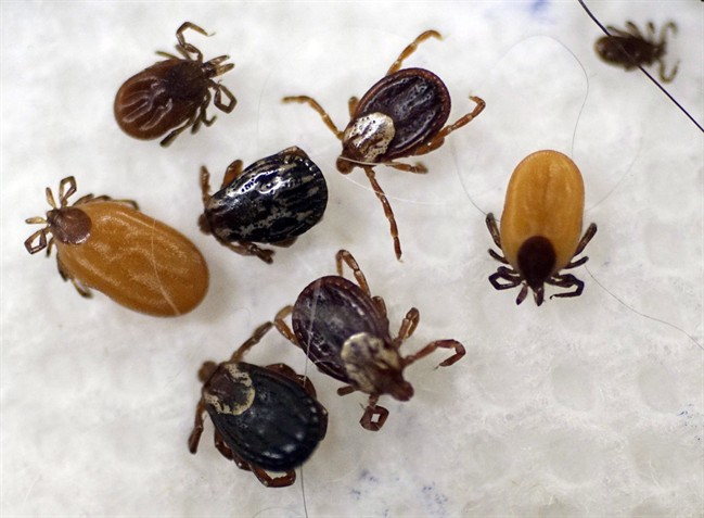 Ticks survive the winter in a variety of ways, but do not go away just because it is cold.