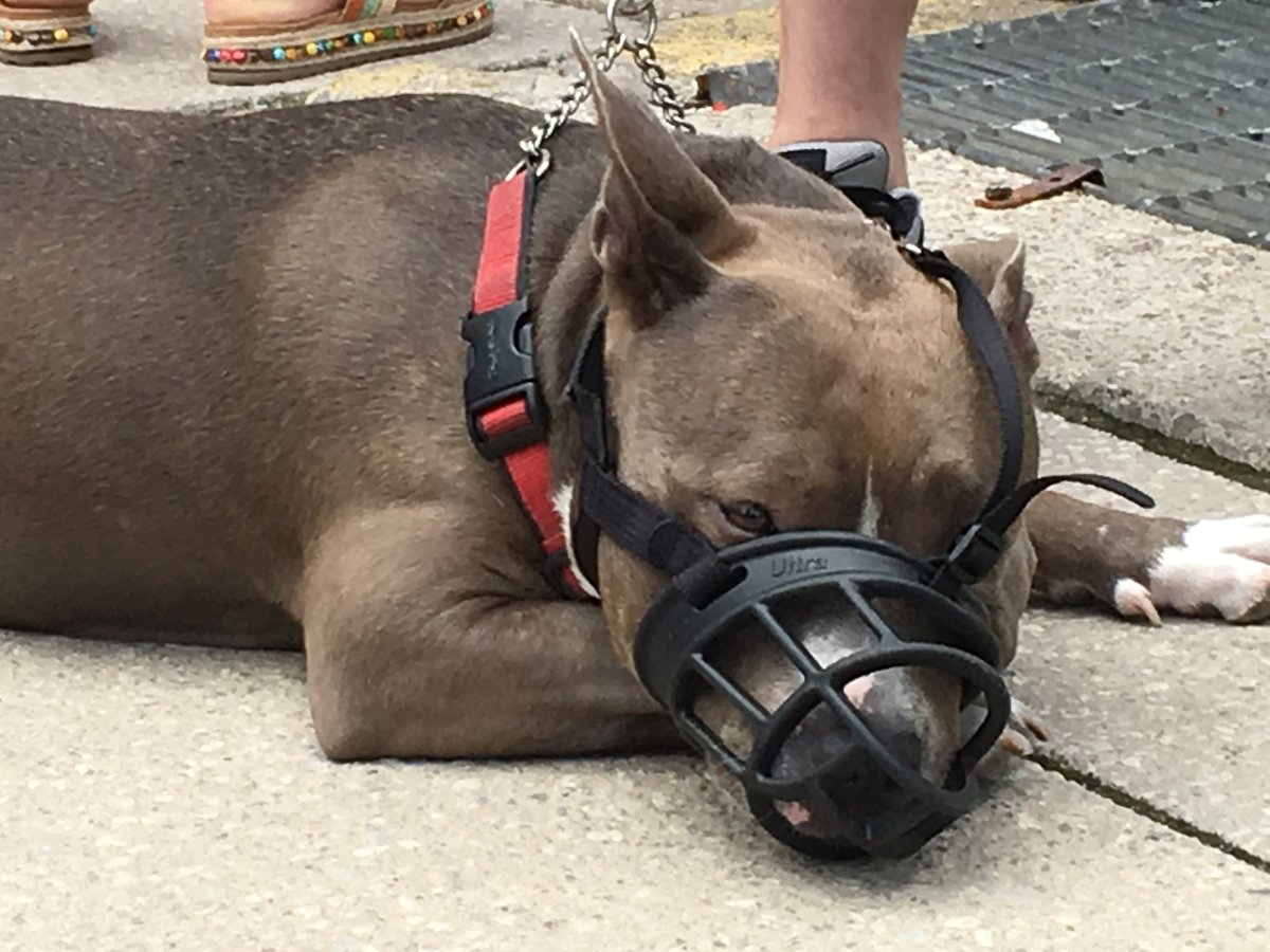 Under the new bylaw, dog bites must be reported to city officials within 72 hours.