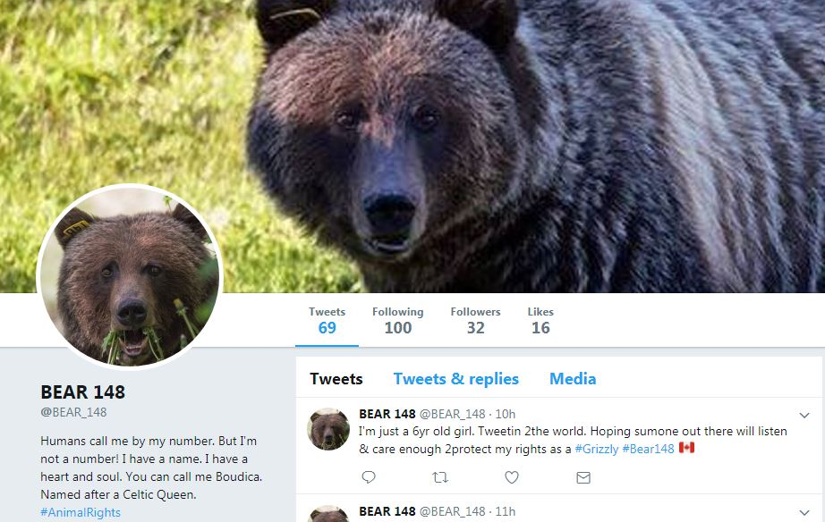 An anonymous Twitter account in the name of Bear 148 is gaining followers since its creation at the beginning of August.