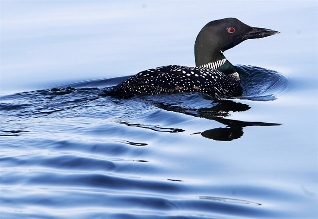 Bacteria counts can vary depending on the conditions, with the most common culprits being rain, wind and waterfowl.