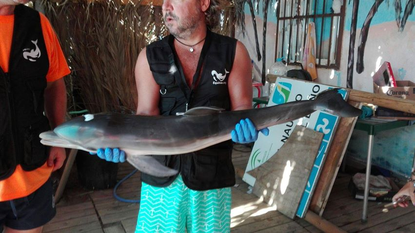 The body of a baby dolphin was pulled from the water by marine conservationists on Aug. 11, 2017.