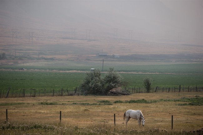 File Photo: Thick smoke from wildfires fills the air as a horse grazes near Cache Creek, B.C., on Tuesday, August 1, 2017.
