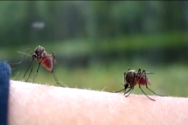 Two human cases of West Nile Virus have been confirmed by Peterborough and area health units.