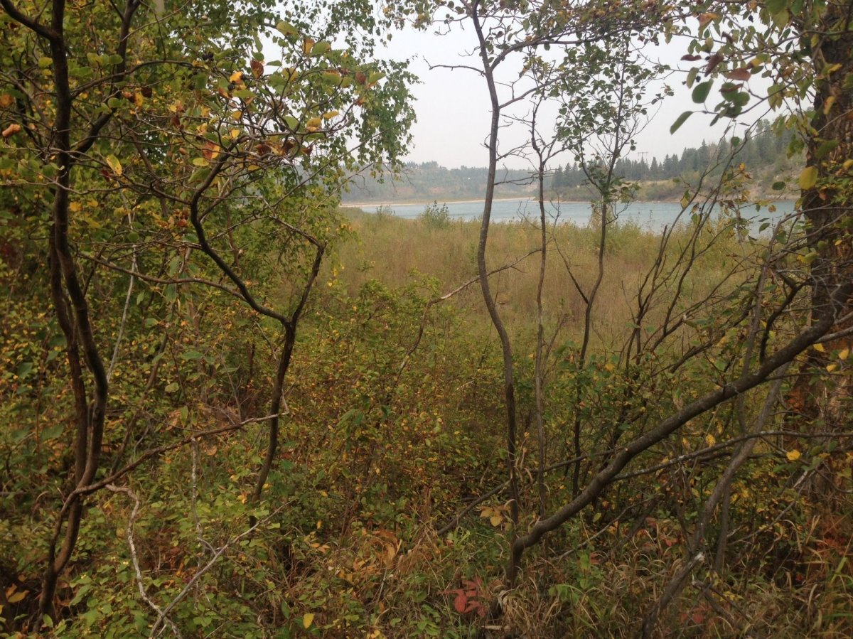 Big Island-Woodbend Natural area is within Edmonton city limits but it also spreads into Enoch First Nation, Parkland and Leduc counties and the Town of Devon.