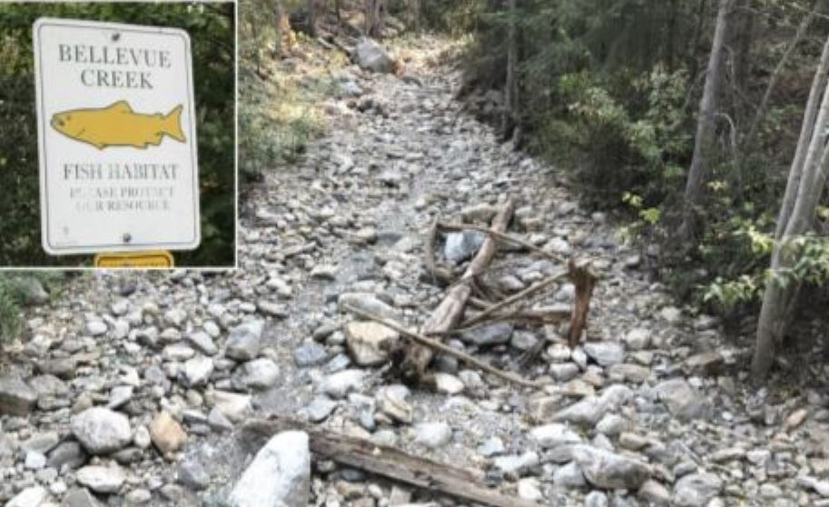 Kelowna's Bellevue Creek during drought conditions in 2017. The B.C. River Forecast Centre says rivers and streams are at risk of low flows this summer with snowpack levels for mid-May verging on historic lows.