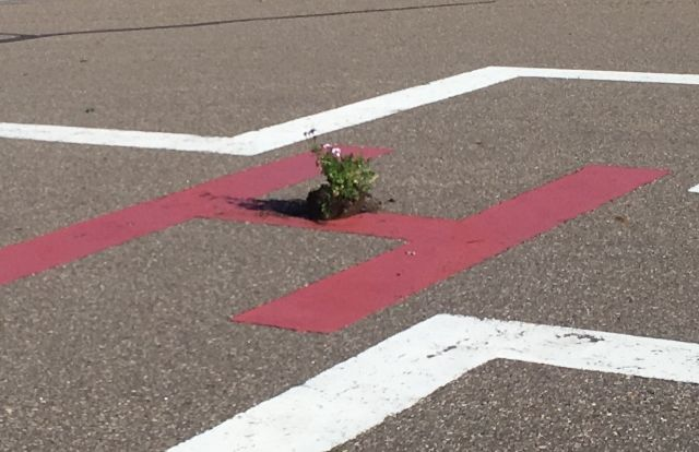 RCMP said ten aviation lights and three lenses were broken and a planter was left in the centre of the helipad at the hospital in Elk Point, Alta. September 11, 2017.
