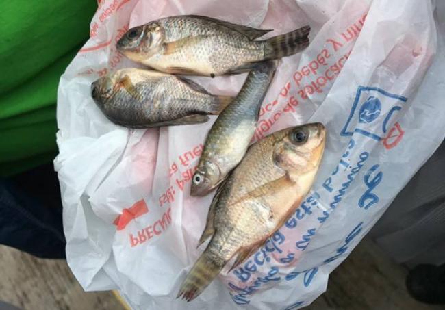 Fish rain down on coastal Mexican city - image