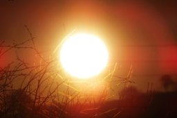 Continue reading: Heat warning issued for Peterborough, City of Kawartha Lakes, Northumberland County