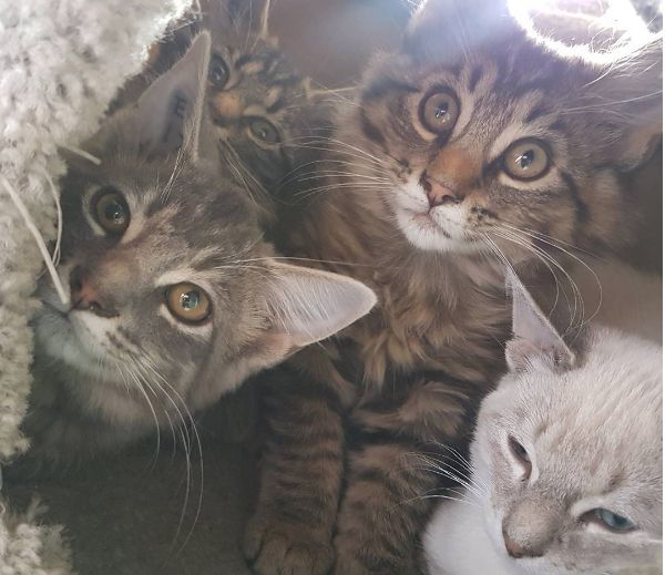 A file photo of cats at the Edmonton Humane Society.