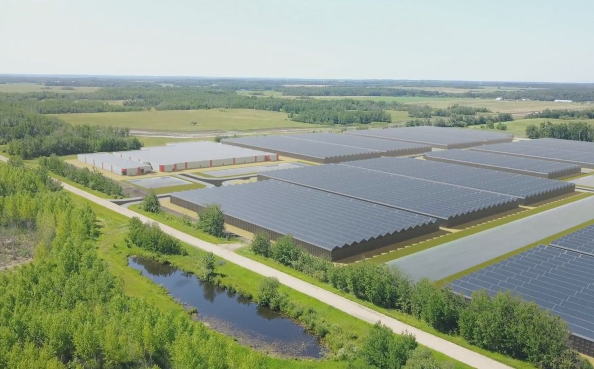 A rendering of Atlas Growers' 38,000-sq.-ft. facility in Lac Ste. Anne, Alta.