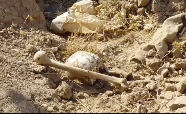 In this Nov. 11, 2017 frame grab from video, bones lie on the ground in an area recently retaken from the Islamic State group near Hawija, Iraq.