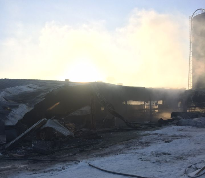 About 130 animals were killed in an early morning fire at Lakeside Dairy Friday, Nov. 17, 2017.