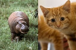 Continue reading: Declawing cats? Banned. Dogs? Saved. Horses? Found. Hippo? For Christmas.