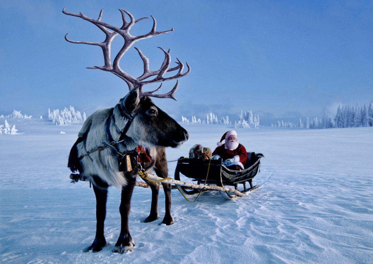 A Nova Scotia scientist says all of Santa's reindeer are all female.