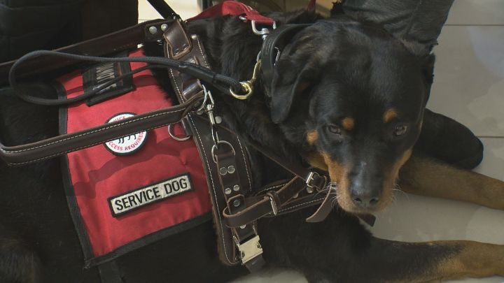 On Tuesday, the Alberta government said five new organizations will now be able to train, test and provide service dogs to people across the province who may need them.