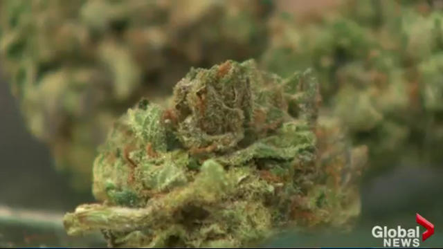 Nova Scotia has announced several new NSLC cannabis store locations throughout the province.
