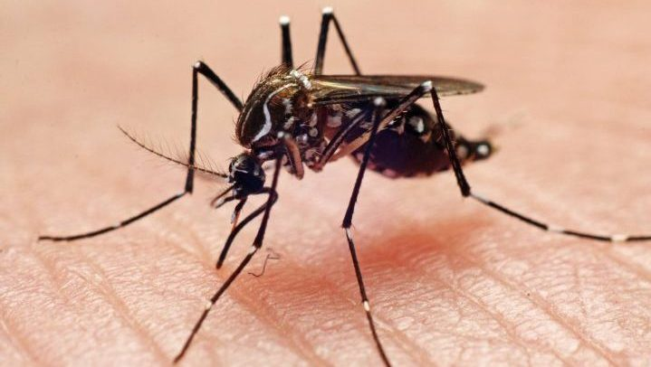Entomologist Taz Stuart says no water equals no mosquitoes.