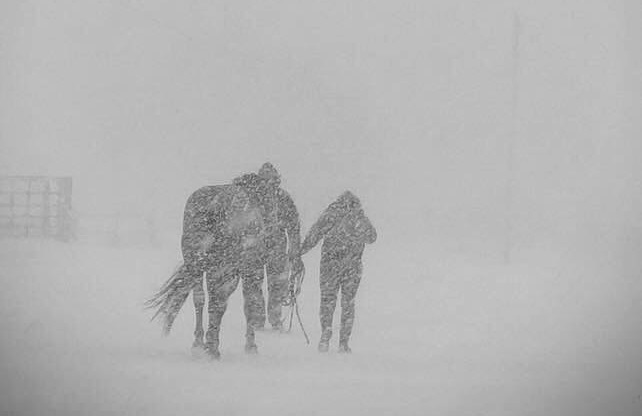 Strong winter storm hitting Manitoba Tuesday - image