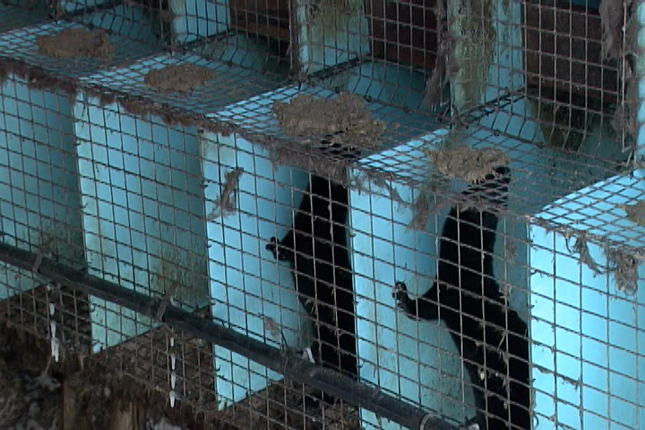 The trial for a man accused of breaking into a mink farm in Battersea has ended.