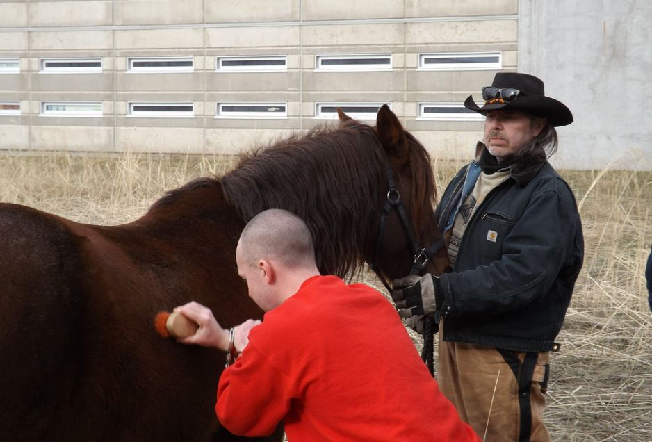 Horses are being used at the jail near Oliver in a new prisoner rehabilitation program.