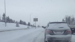 Continue reading: Only in Canada: Moose on the loose halts Calgary traffic during snowstorm