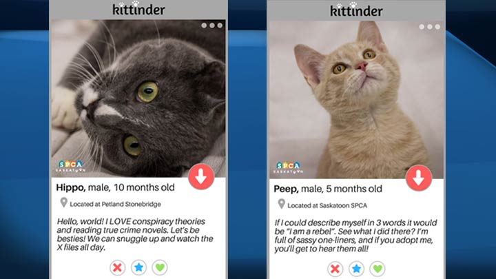 """""""Kittinder"""" is the latest initiative from the shelter to help find some furry friends a home."""