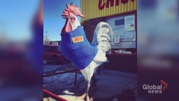 Continue reading: Kensington's Chicken on the Way chicken statue gets 'much-needed makeover'