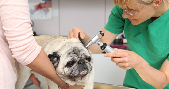 Caring For Your Animal Is Pet Insurance Worth The Cost National Globalnews Ca