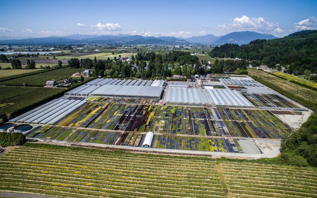 The Van Belle Nursery in Abbotsford is concerned about the costs of the new provincial payroll tax.