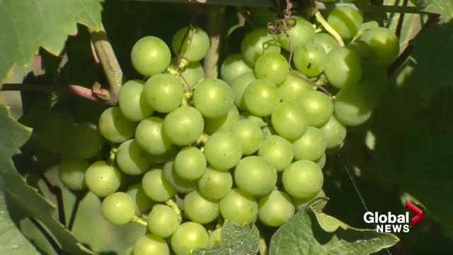 The federal government is providing nearly $640,000 to help the province's vintners better compete globally.