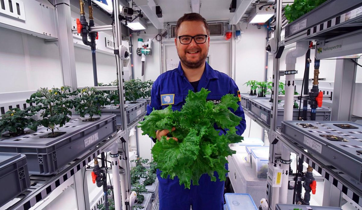 The undated photo provided by the German aerospace center (DLR) shows engineer Paul Zabel with fresh salad he harvested in the EDEN-ISS greenhouse at the Neumeyer-Station III on Antarctica. The project without soil but with a closed water cycle, optimized lightning and carbon dioxide levels is a test to become part of the nutrition for astronauts in future moon or Mars missions.