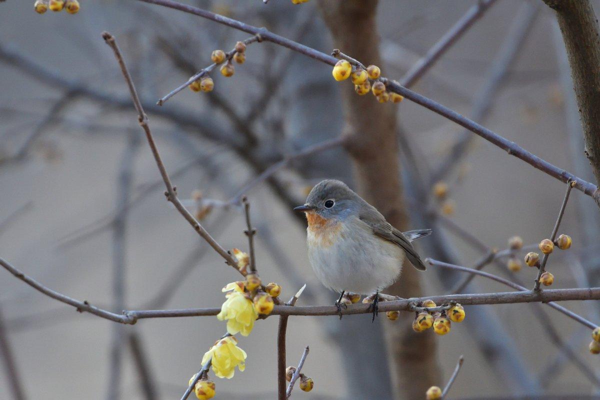 A bird sitting on a tree branch.