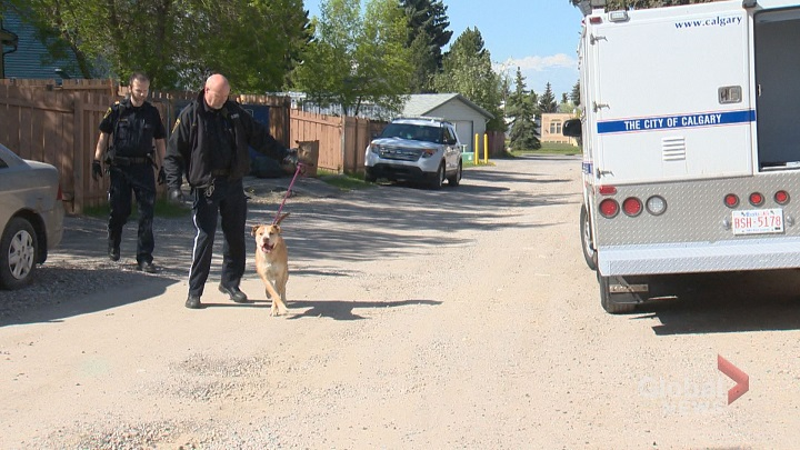 Calgary bylaw officers are investigating after a dog bit a woman in Calgary Wednesday.