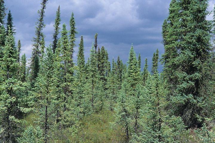 Birch Mountains Park in Alberta.