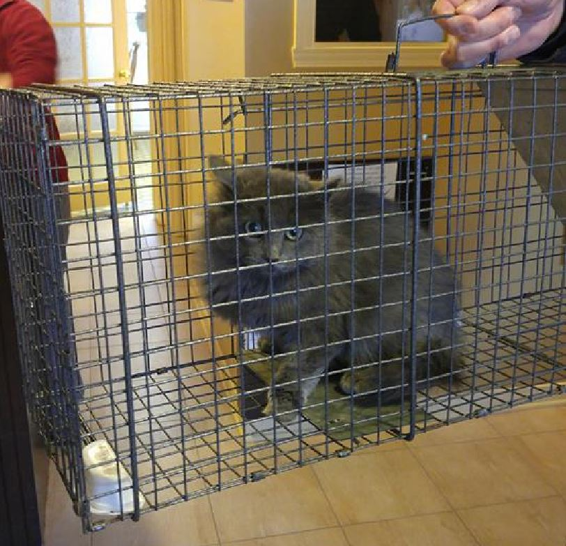 A cat trapped by Roy and Cher's Rescue Farm in their catch, neuter and release program. Critics of Cornwall's proposed cat bylaw say a similar program is needed to curb the city's feline population explosion.